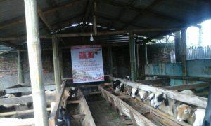 Kandang Domba DapoerAqiqah.com